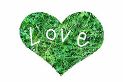 Abstract green heart. Abstract heart of fresh green grass on white background Stock Photos