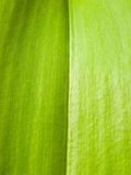 Abstract green leaf Stock Photo