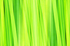 Abstract green leaf Stock Image