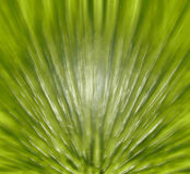 Abstract green leaf bacground Royalty Free Stock Photo