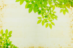 Abstract Green leaf background Stock Image