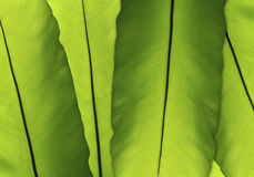 Abstract green leaf background Stock Photo