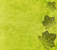 Abstract green leaf background Royalty Free Stock Image