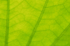 Abstract green leaf  for background Stock Photos