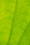 Abstract green leaf  for background Stock Images