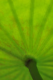 Abstract green leaf  for background Stock Photo