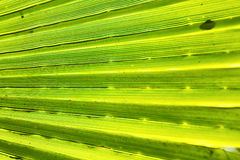 Abstract green leaf in blur Royalty Free Stock Photo