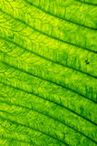 Abstract Green Leaf Stock Photos