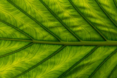 Abstract green leaf design Stock Images