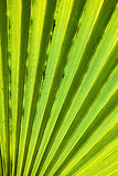 abstract green leaf Stock Images