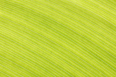 Abstract green leaf lines background texture Stock Image