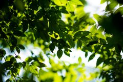Green leaf pattern nature green background. royalty free stock image