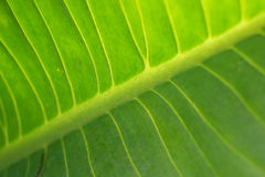 Abstract green leaf texture Stock Photo