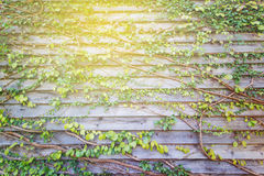 Abstract green leave wood wall Royalty Free Stock Photo
