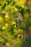 Abstract green leaves Stock Images