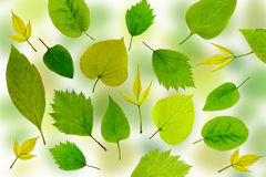 Abstract green leaves background. Leaves pattern Royalty Free Stock Image