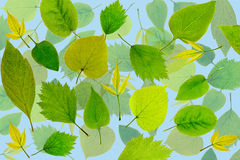 Abstract green leaves background. Leaves pattern Royalty Free Stock Photography
