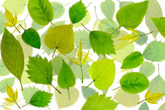Abstract green leaves background. Leaves pattern Royalty Free Stock Photo