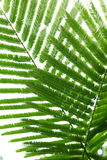Abstract green leaves in nature background Royalty Free Stock Images