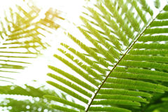 Abstract green leaves in nature, sunlight through leaf on tree Stock Image