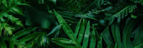 Abstract green leaves nature texture background