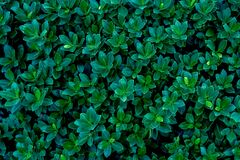 Abstract green leaves texture