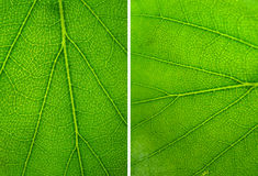 Abstract green leaves texture Royalty Free Stock Photography