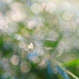 Abstract green natural background Royalty Free Stock Images
