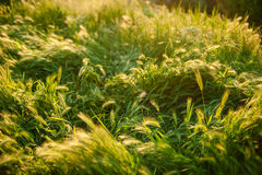 Abstract green natural background. Fresh spring grass on defocused light green background. Green floral background with bunch of grass and shimmering spot stock photo