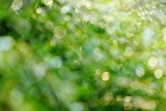 Abstract green nature background Royalty Free Stock Photo