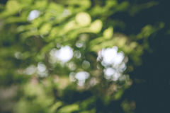 Abstract green nature background Royalty Free Stock Images