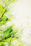 Abstract green nature background Royalty Free Stock Photos