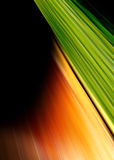 Abstract green and orange background Stock Image