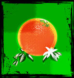 Abstract green and orange Stock Images
