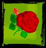 Abstract green and red rose Stock Photos