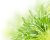 Abstract green spring background. Abstract blurred green spring background with bokeh