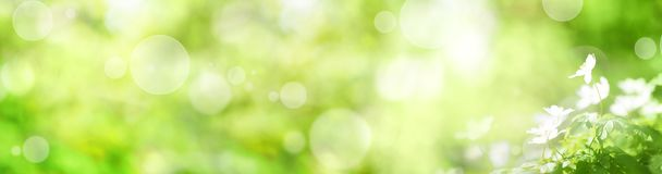 Abstract green spring background. Abstract green spring panorama with small white flowers and bokeh effects for a easter decoration Royalty Free Stock Photography