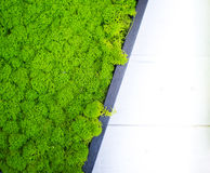 Abstract green stabilized moss surface decoration background. Shiny green stabilized moss plant on surface in black frame side part on white defocused wooden stock photos