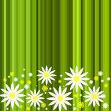 Abstract green stripe floral background Royalty Free Stock Images