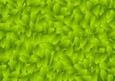 Abstract green summer leaves texture Royalty Free Stock Photos