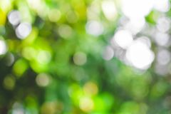 Abstract green of tree bokeh background stock images