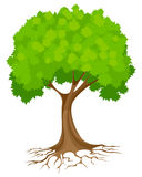 Abstract green tree Royalty Free Stock Photo