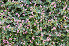 Abstract green vegetation with purple flower background.  Royalty Free Stock Photography