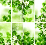 Abstract Green Wallpaper Background with Spring Foliage stock images