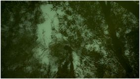 Abstract Green Water!. Abstract green water, outside day, chill, trips and travels days in the forest stock image
