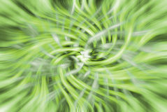 Abstract green whirl background Stock Image