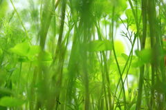 Abstract greenery Royalty Free Stock Photography