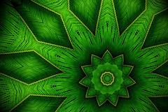 Abstract greenery background, palm leaves with kaleidoscope effe. Ct Stock Image