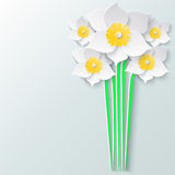 Abstract greeting card with bouquet 3d white daffodils. Spring floral paper background. Royalty Free Stock Photo
