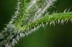 Abstract groen blad Royalty-vrije Stock Afbeeldingen